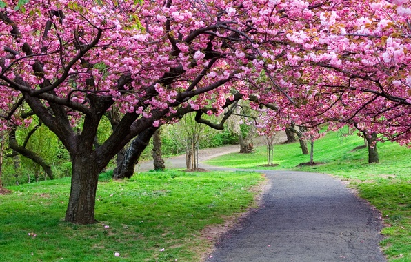 Картинка дорога, лес, деревья, природа, парк, путь, фото, тропинка