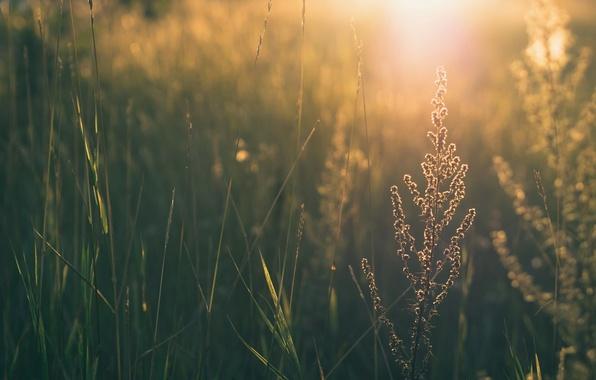 Картинка зелень, трава, листья, солнце, цветы, природа, фон, widescreen, обои, wallpaper, листочки, широкоформатные, background, leaves, полноэкранные, …