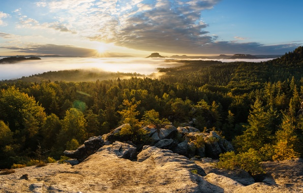Картинка лес, горы, туман, восход, рассвет, утро, Германия, панорама, Germany, Саксония, Saxony, Саксонская Швейцария, Saxon Switzerland, …