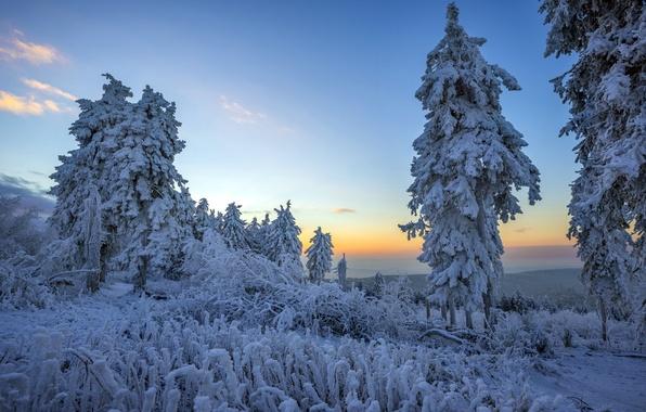 Картинка зима, лес, снег, пейзаж, утро