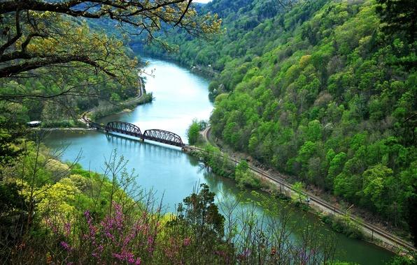 Картинка осень, лес, цветы, горы, мост, река, склон