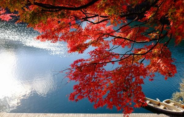 Картинка осень, ветки, озеро, пристань, лодки, Япония, Japan, клён, Фукусима, Fukushima, Bandai, японский клён, озеро Бишамон, …