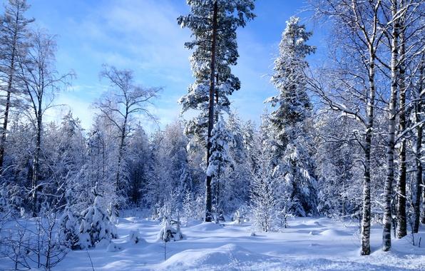 Картинка зима, лес, снег, много
