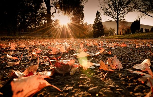 Картинка дорога, осень, солнце, макро, лучи, свет, блики, листва