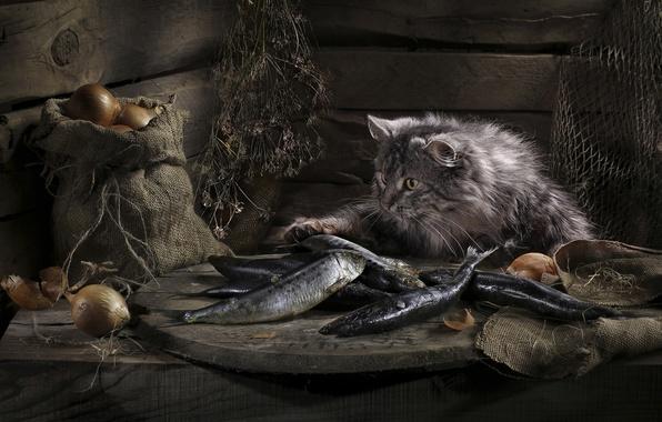 Картинка кошка, удача, рыба