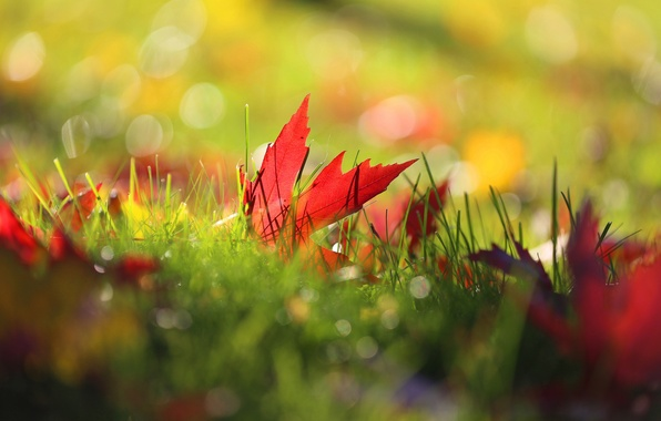 Картинка осень, трава, листья, макро, природа, боке