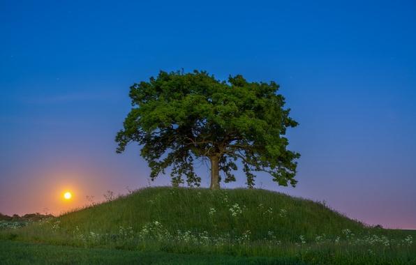 Картинка закат, дерево, холм, Швеция, Sweden, Сконе, Skåne
