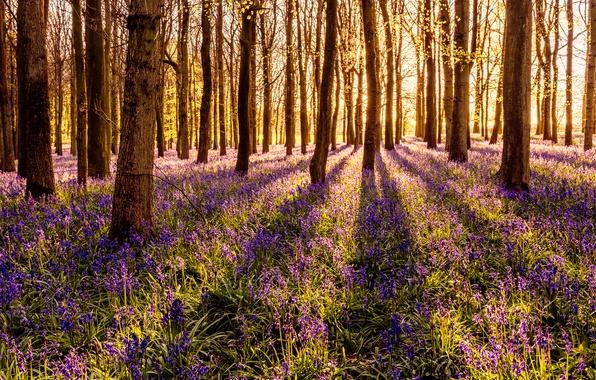 Картинка лес, трава, солнце, деревья, цветы, весна, колокольчики