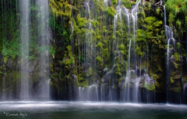 Картинка лес, природа, озеро, водопад, растения, джунгли
