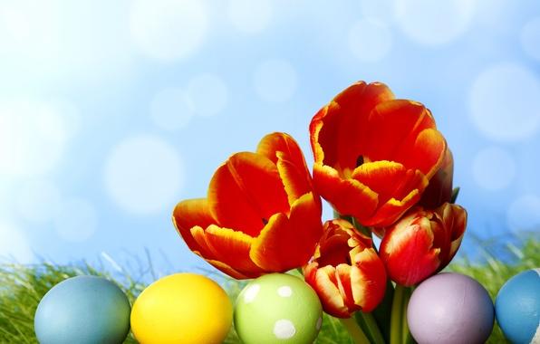 Картинка трава, цветы, яйца, весна, colorful, пасха, тюльпаны, flowers, tulips, spring, крашеные, eggs, easter