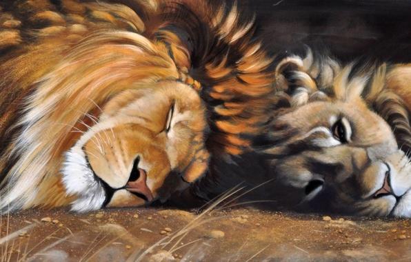 Картинка животные, кошки, сон, хищники, картина, лев, арт, грива, львица, дикие, Pollyanna Pickering