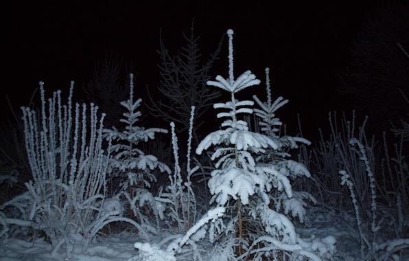 Картинка зима, лес, свет, снег, ночь, ель
