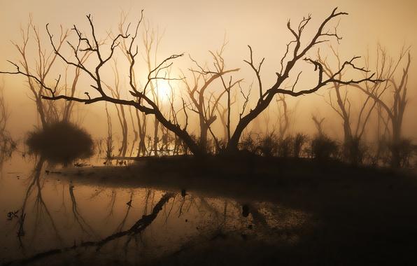 Картинка деревья, туман, озеро, утро, силуэт, солнечный свет, коряги
