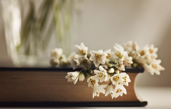 картинки цветы и книга