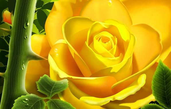 Обои 3d, сад, цветы, роза, шипы картинки на рабочий стол, раздел ...
