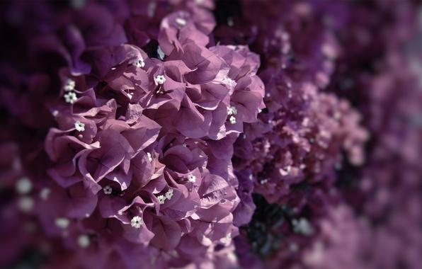 Картинка макро, цветы, природа, краски, фокус, colors, лепестки, nature, flowers, macro, focus, 2560x1440, petals