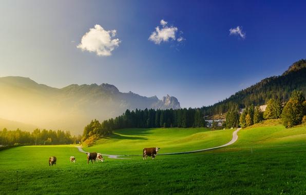 Картинка зелень, лес, небо, облака, свет, горы, синева, корова, коровы, луга, Алпы