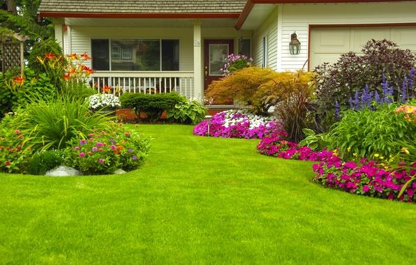 Картинка зелень, трава, цветы, дом, газон, сад, кусты, Цинния, Петунья