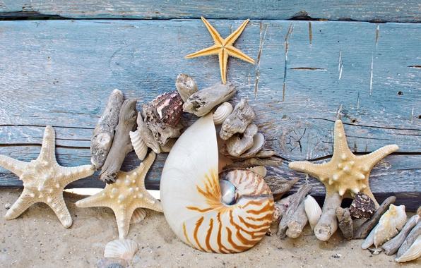 Картинка песок, пляж, дерево, ракушки, wood, sand, marine, камушки, морские звезды, starfish, seashells