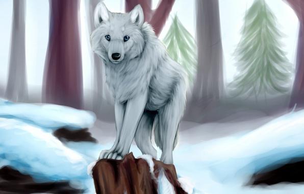 Картинка зима, белый, снег, деревья, волк, пень, ёлки