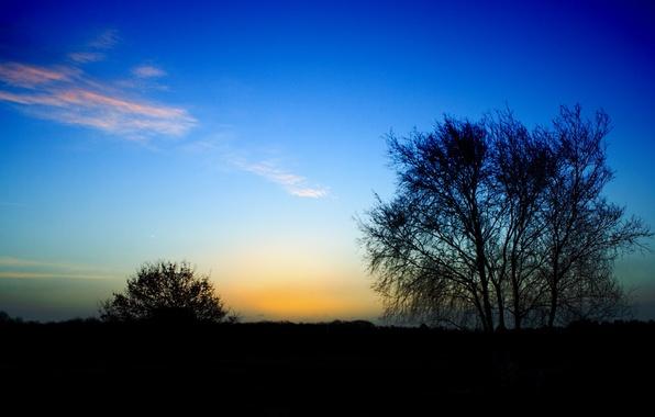Картинка дерево, перистые облака, куст, конец дня