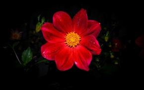 Картинка цветы, flower, rad