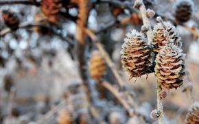 Обои зима, снег, ветки, природа, шишки, nature, 1920x1200, winter, snow, боке, bokeh, branches, pinecones