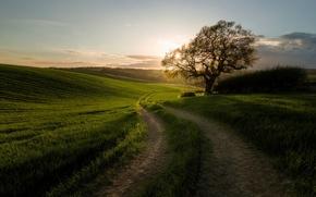 Картинка дорога, дерево, утро