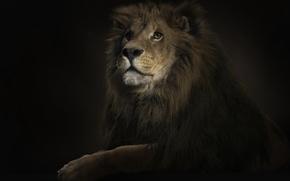 Картинка освещение, лев, 150, царь
