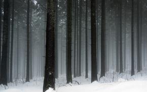 Картинка холод, зима, снег, деревья, дерево, стволы, мороз, снегопад, леса, winter wallpapers, зимняя природа
