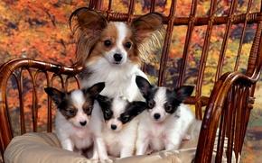 Обои семейное фото., Мама, щенки