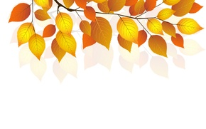 Картинка осень, листья, веточка, белый фон, autumn, leaves, white background, twigs