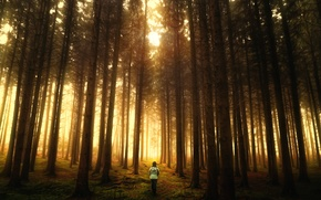 Картинка лес, обработка, Misty Forest