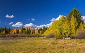 Картинка осень, лес, деревья, поляна, США, Wyoming, кусты, национальный парк, Гранд-Титон, штат Вайоминг, Grand Teton