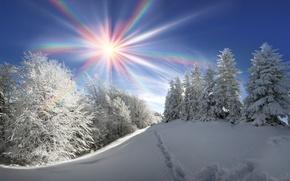 Обои лес, небо, солнце, деревья, зима, снег, лучи, сугробы