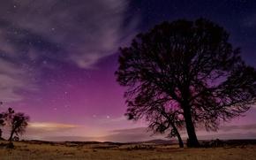 Картинка дерево, ночь, силуэт, природа, небо, звезды