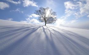 Картинка зима, солнце, снег, природа, дерево