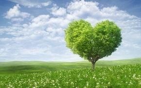 Картинка небо, облака, любовь, цветы, дерево, романтика, сердце, love, День святого Валентина, sky, heart, flowers, clouds, …