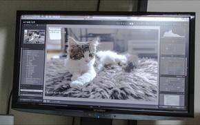 Картинка Mitsubishi, Hi-Tech, cats, other