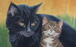 Картинка кот, природа, чёрный, котёнок, коричневый