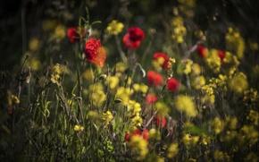 Обои лето, поле, цветы