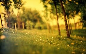Картинка поле, лес, лето, трава, поляна, одуванчики