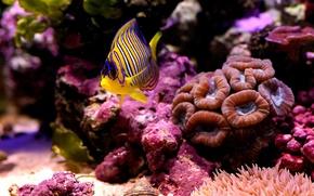 Картинка море, макро, рыбка, дно, кораллы