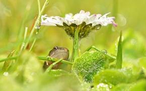 Обои цветок, трава, капли, блики, лягушка