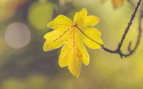 Картинка autumn, leaf, sunny