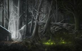 Картинка лес, свет, ночь, дом, рисунок, болото