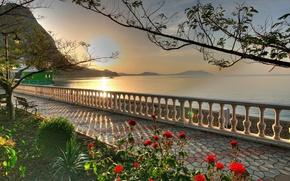 Обои море, небо, солнце, цветы, дерево, побережье, алея
