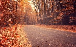 Картинка дорога, осень, лес, листья, деревья, природа, желтые, оранжевые