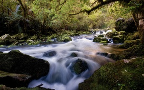 Обои Река, камни, лес