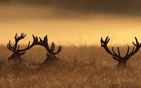 Картинка ночь, природа, олени